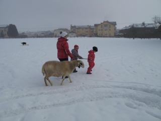 2016- Jänner Schafspaziergang mit Molly